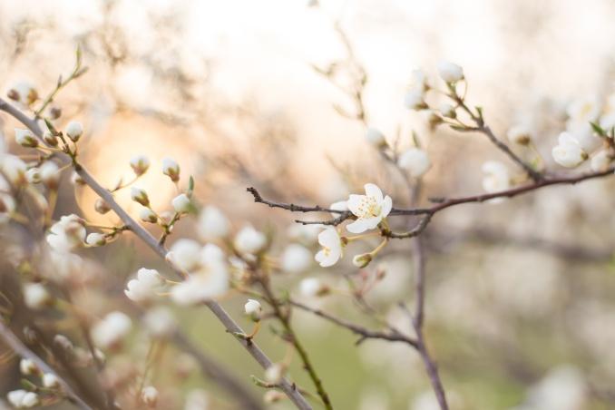 Blütenshooting